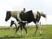 Taz and her new Filly (2011)